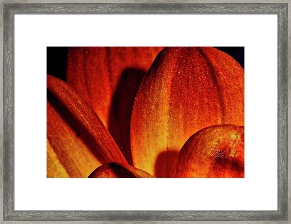 Peach Petals Framed Print