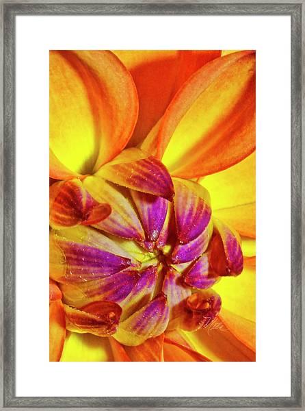 Peach Purple Flower Framed Print