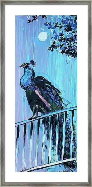 Peacock On A Fence Framed Print