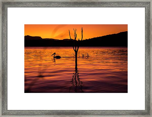 Framed Print featuring the photograph Pelican by Rob D Imagery