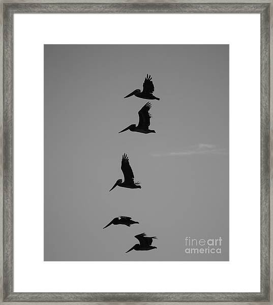 Framed Print featuring the photograph Pelican Silhouette  by Jeni Gray