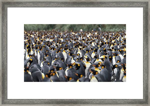 Penguinscape Framed Print
