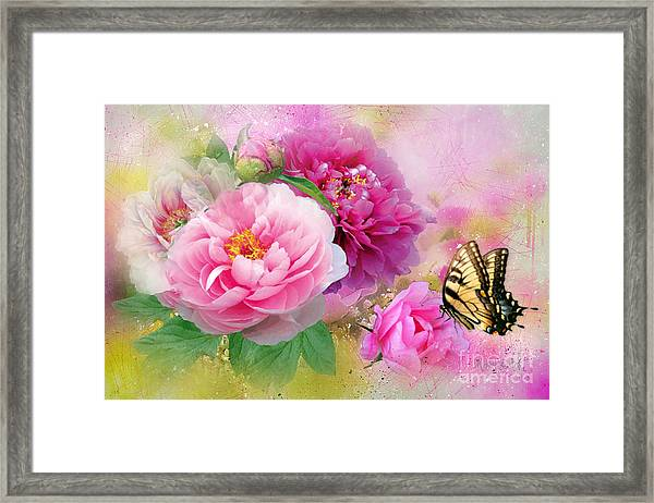 Peonies And Butterfly Framed Print
