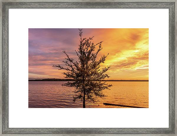 Framed Print featuring the photograph Percy Priest Lake Sunset Young Tree by D K Wall