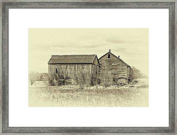 Perfectly Aged - Sepia Framed Print