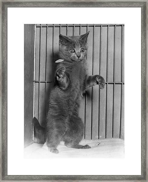 Perky Puss Framed Print
