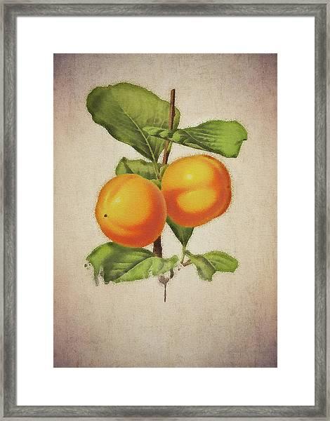 Framed Print featuring the digital art Persimmon by Jan Keteleer