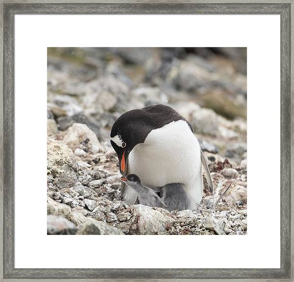 Personality Emerges Early Framed Print