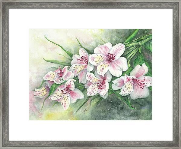 Peruvian Lilies Framed Print