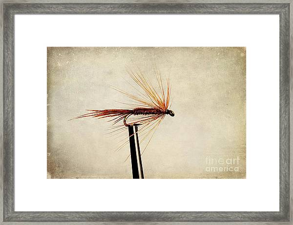 Pheasant Tail Dry Fly Framed Print