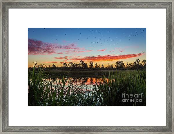 Phinizy Swamp Sunrise - Augusta Ga Framed Print