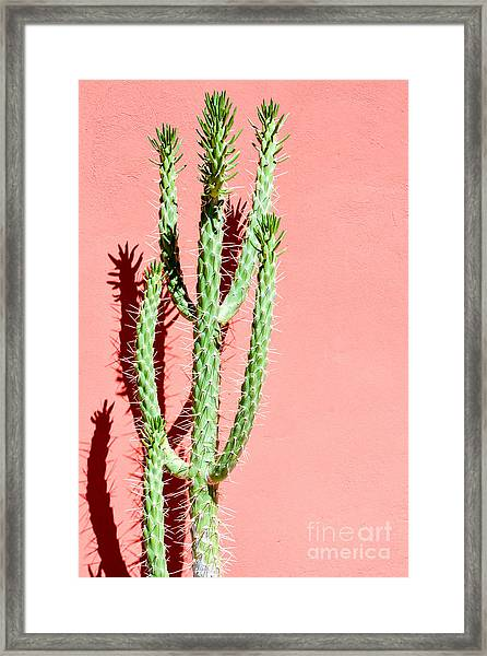 Photo Picture Of A Tropical Cactus Framed Print
