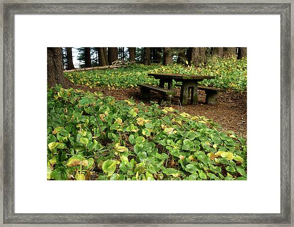 Picnic  Table In The Forest  Framed Print