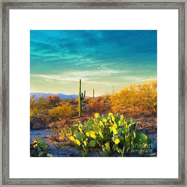 Picturesque, Serene Sunset In Saguaro Framed Print