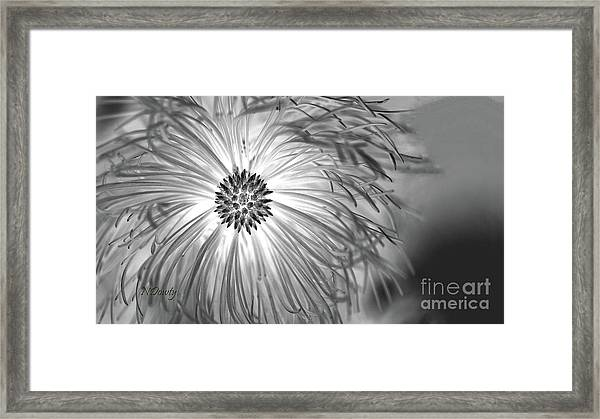 Pine Cone With Needle Halo Framed Print