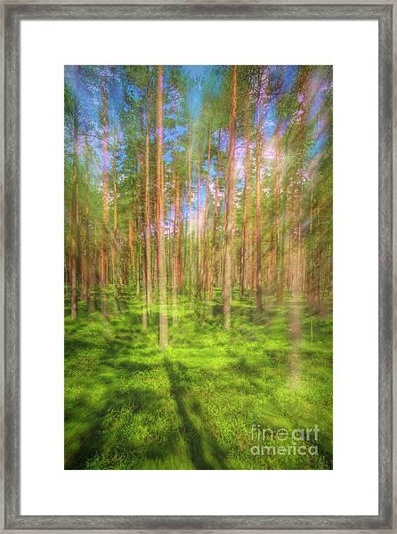 Pine Land 2 Framed Print