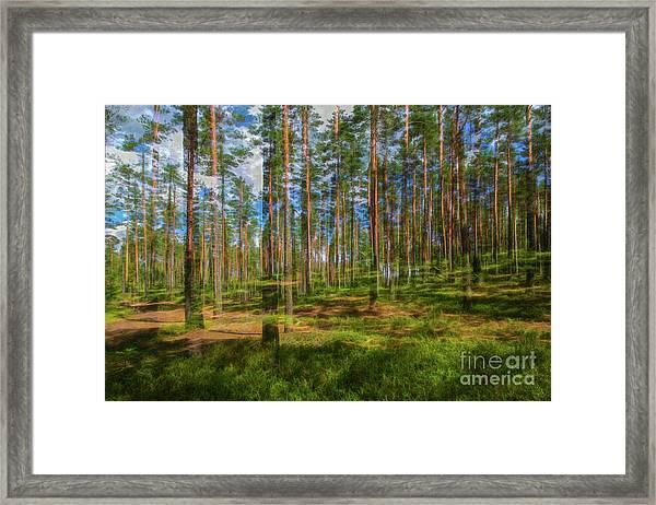 Pine Land Framed Print