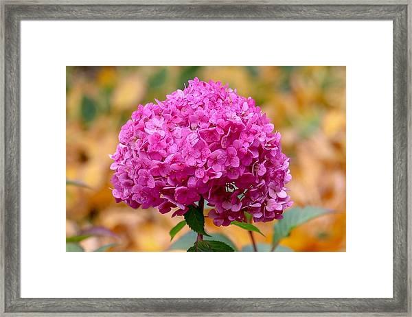 Pink Bouquet  Framed Print