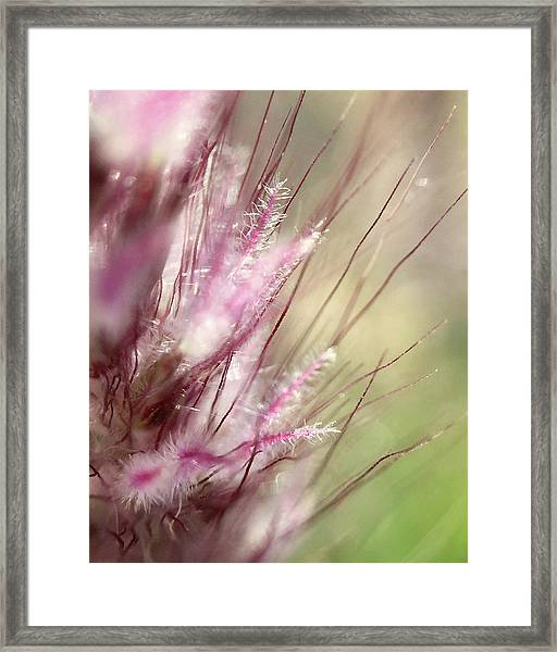 Pink Cotton Candy Framed Print