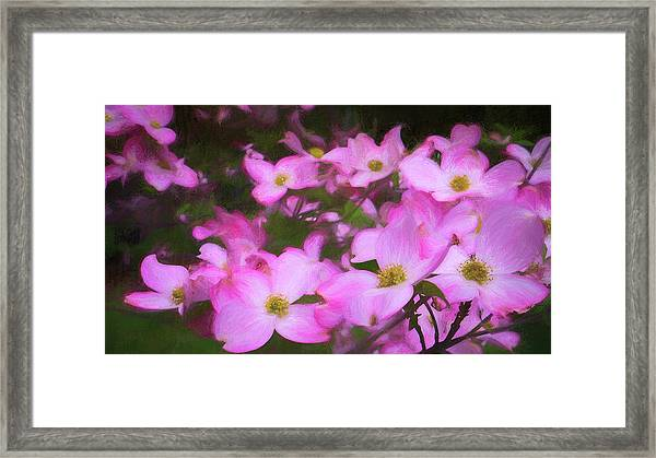 Pink Dogwood Flowers  Framed Print