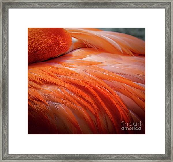 Pink Feathers Framed Print