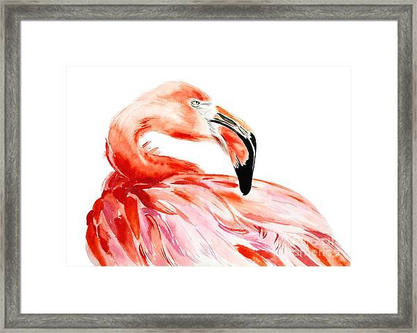Pink Flamingo Bird Profile Portrait Framed Print