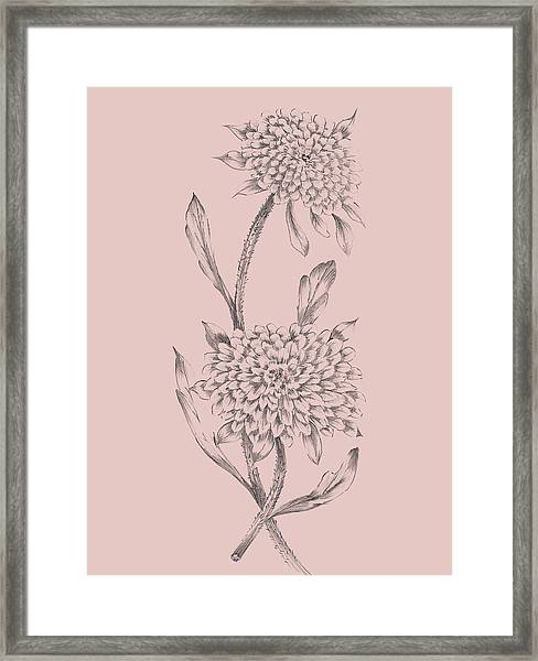Pink Flower Sketch Illustration II Framed Print