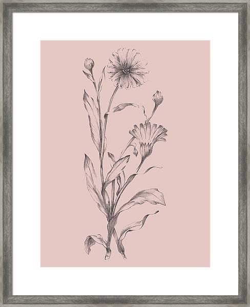 Pink Flower Sketch Illustration IIi Framed Print