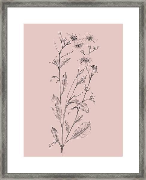 Pink Flower Sketch Illustration Framed Print