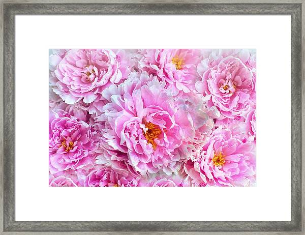 Pink Flowers Everywhere Framed Print