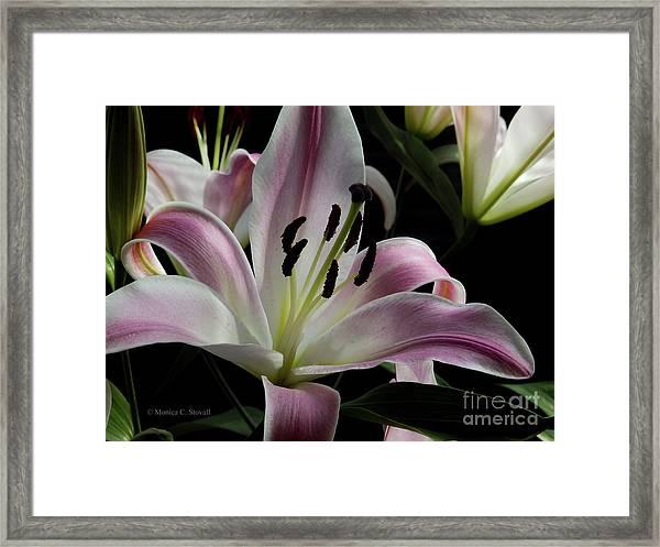 Pink Flowers No. 61 Framed Print
