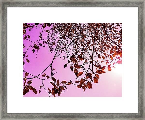 Pink Glow Framed Print