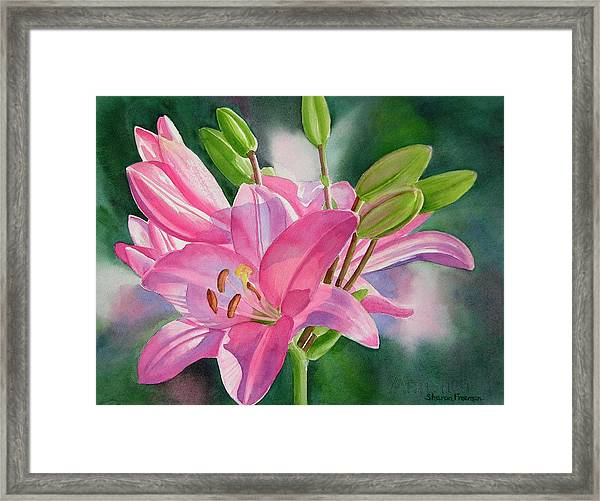 Pink Lily With Buds Framed Print