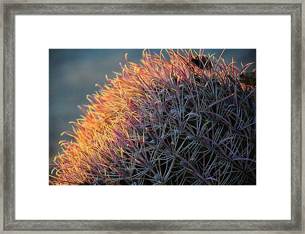 Pink Prickly Cactus Framed Print
