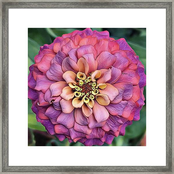 Pink Summer  Framed Print