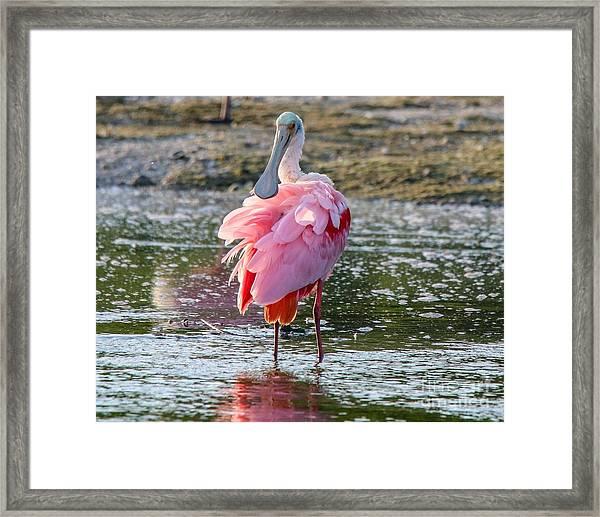 Pink Tutu Framed Print