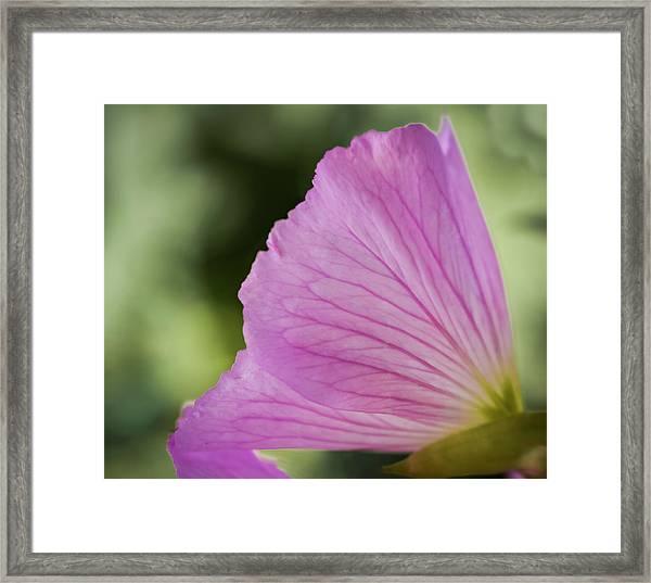 Pink Vains Framed Print
