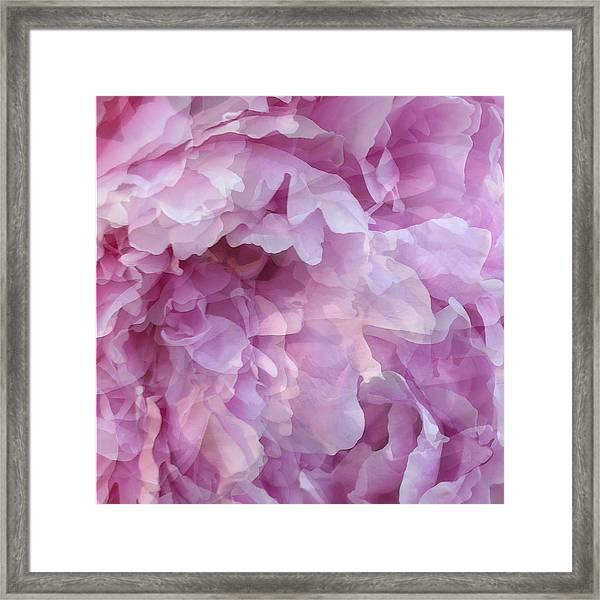 Pinkity Framed Print