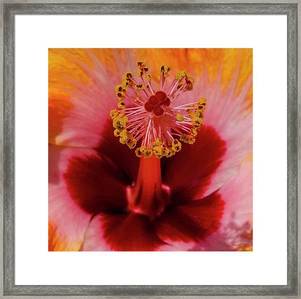 Pistol Packin' Flower Framed Print