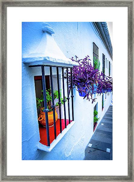 Plants On A Facade Framed Print