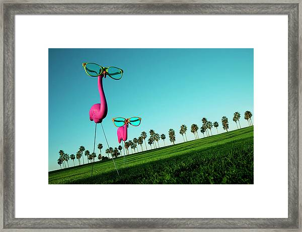Plastic Pink Flamingos On A Green Lawn Framed Print