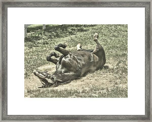 Playful Framed Print by JAMART Photography