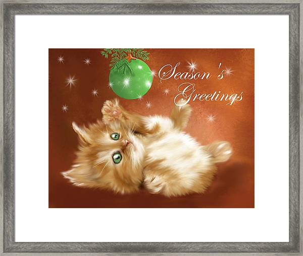 Playful Tabby Framed Print