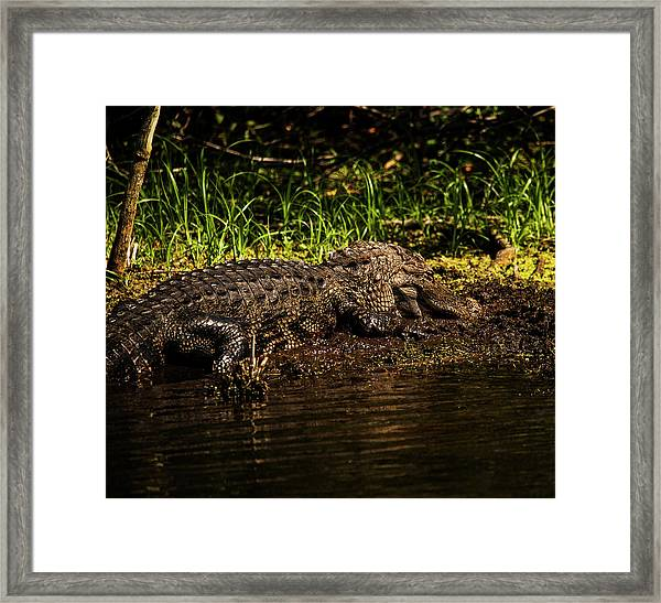 Playing In The Mud Framed Print