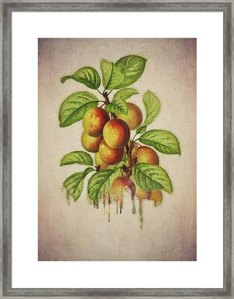Framed Print featuring the digital art Plums by Jan Keteleer
