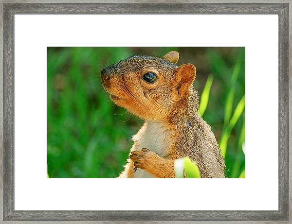 Pondering Squirrel Framed Print