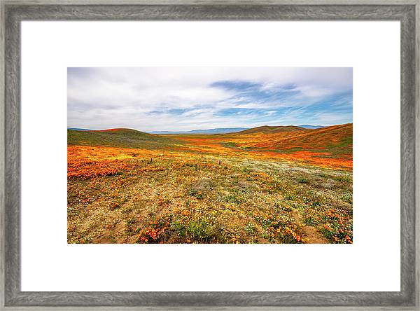 Poppies As Far As The Eye Can See Framed Print