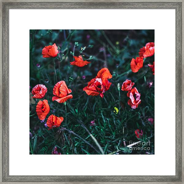 Poppies In The Field. Minimal Style Framed Print