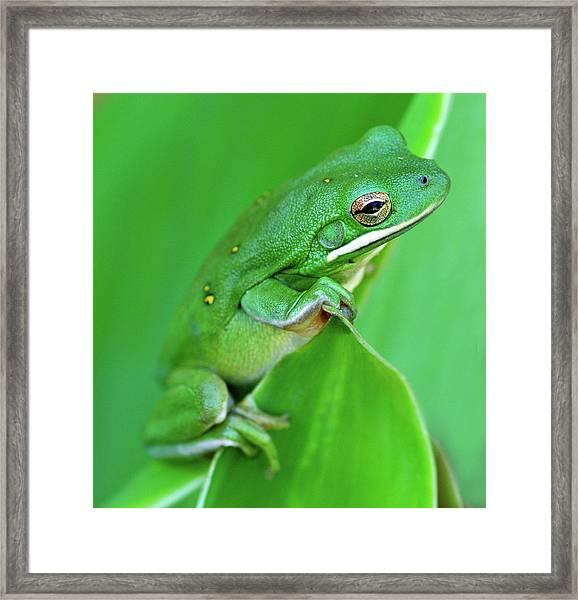 Portrait In Green Framed Print