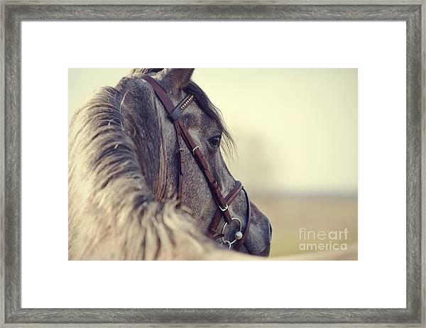 Portrait Of A Sports Stallion In A Framed Print by Elya Vatel